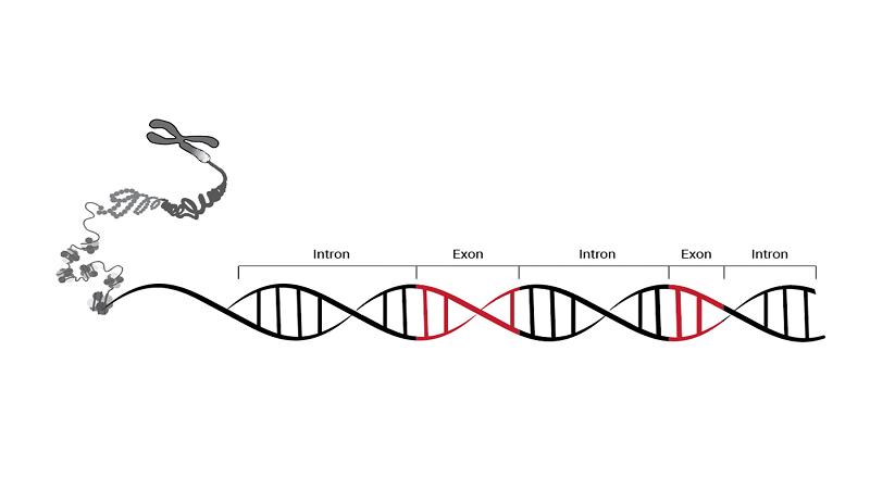 هول اگزوم یا WES چیست؟ | آزمایشگاه ژنتیک اصفهان